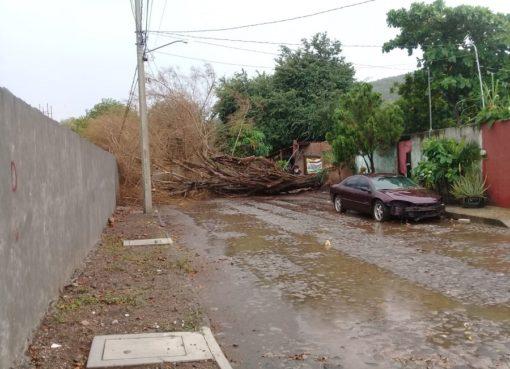 Lluvias dejan encharcamientos y dos árboles caídos