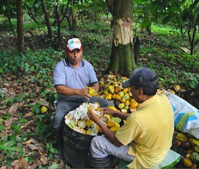 México importa 80 % del cacao que consume la industria
